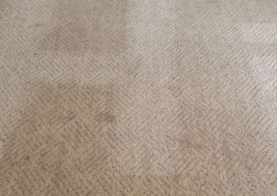 Raleigh Residential Carpet Cleaning 1